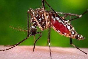 Usai baca penjelasan ilmiah ini kamu bakal kasihan sama para nyamuk
