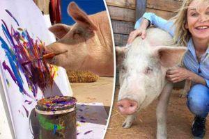 Pigcasso, babi nyeni yang bisa menghasilkan lukisan indah