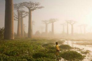 15 Pohon terindah di dunia, ada yang umurnya sudah ribuan tahun