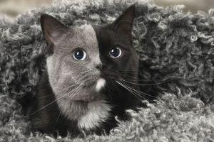 Unik banget, kucing ini lahir dengan 'dua wajah'