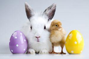 Ini makna kelinci dan telur pada Hari Raya Paskah