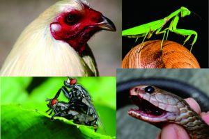 5 Hewan ini ternyata punya nyawa cadangan lho!