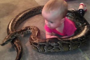 Viral, bayi ini senyum-senyum bermain dengan ular piton