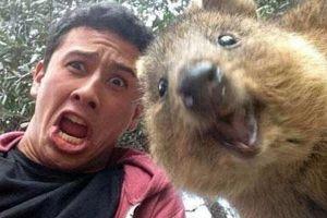 10 Potret wefie bareng Quokka, hewan paling bahagia sedunia