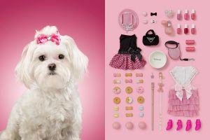 6 Kolase foto tunjukkan kehidupan anjing & barang milik mereka, gemes