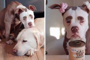 Madame Eyebrows, anjing 'sedih' saingan Grumpty Cat yang viral