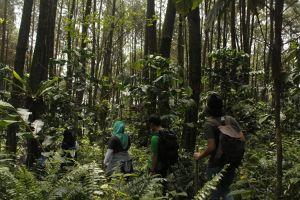 Hutan Indonesia, terluas kedua di dunia tapi juga sumbang emisi besar?