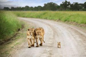 6 Portet mesra ini tunjukan semua makhluk hidup memang butuh cinta