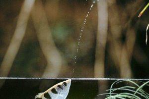 Demi bertahan hidup, 7 hewan air ini jadi pemburu hewan darat
