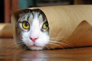 Satu daerah di Selandia Baru akan melarang warganya memelihara Kucing