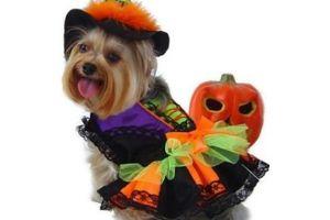 Gini cara anjing merayakan Hallowen, kostumnya bikin gemas!