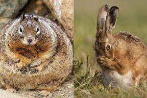 12 Potret lucu ketika hewan lagi mengandung, makin gemas!