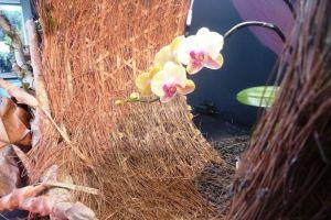 Gak sekadar merangkai bunga, ini 5 keunikan dari seni Ikebana