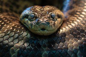 5 Fakta unik Anaconda, ular besar yang sering nongol di film