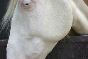 Albino, 9 hewan ini seperti berasal dari planet lain