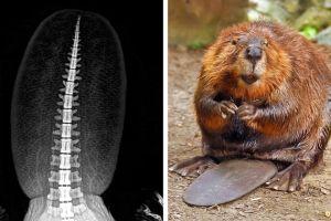 14 Potret tubuh hewan ini terlihat langka bila di-X-Rays