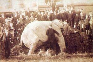 4 Hewan sirkus ini alami kematian secara tragis, ngeri banget!