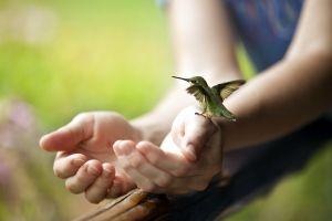 8 Fakta mengenai Hummingbird, burung terkecil di dunia yang memesona