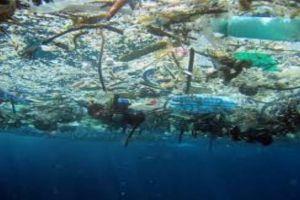Ini hubungan membuang sampah sembarangan & rusaknya ekosistem laut