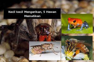 Meski berukuran kecil, 5 hewan ini termasuk mematikan