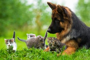 8 Fakta tentang anjing, dari keracunan cokelat sampai deteksi penyakit