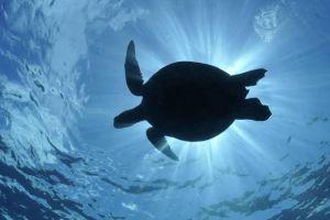 Sering salah penyebutan, 3 kelompok kura-kura ini ternyata berbeda lho