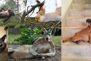 Gayanya mirip manusia, 15 hewan ini berpose bak model profesional