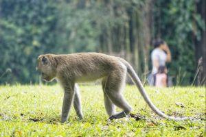 Taman Balekambang, wisata murah & edukatif buat semua kalangan