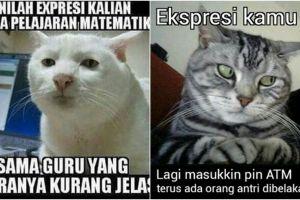 15 Meme kelakuan kucing ini dijamin bikin ketawa, kocak banget