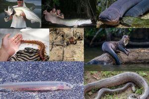 Inilah 20 hewan penghuni Hutan Amazon yang paling mematikan