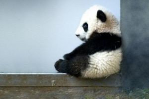 10 Foto bayi hewan liar ini bikin hati meleleh, gemesin banget