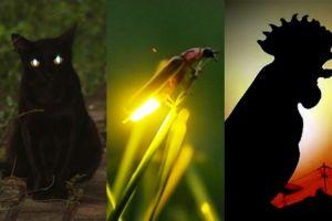 7 Hewan ini diyakini sebagai tanda kehadiran makhluk gaib