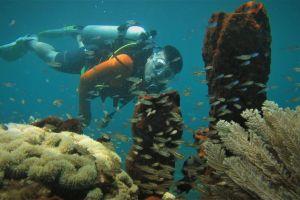 3 Taman laut di Manado ini tidak kalah cantik dengan Bunaken