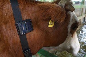 Pengembangan IOT (Internet Of Things) menjadi sahabat para peternak