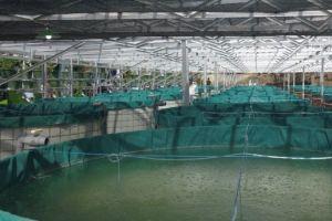 Tingkatkan efektivitas budidaya ikan dengan sistem kolam pintar