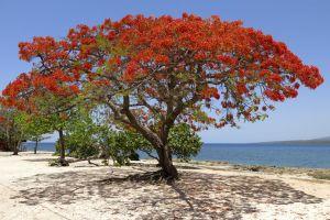 7 Pohon peneduh ini cocok ditanam di halaman rumah, bikin sejuk
