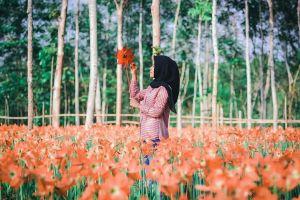 Pesona Taman Bunga Amarilis Gunungkidul ini bak di Eropa, indah banget