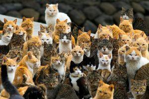 11 Pulau khusus di Jepang ini cocok untuk pencinta kucing