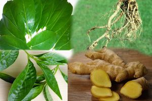 Mudah ditemukan, 4 tanaman herbal ini bisa untuk pengobatan asam urat