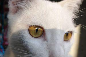 Nafsu makan kucing menurun? Lakukan 4 hal ini untuk memulihkannya