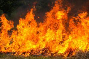 Mari jaga hutan, waspadai 7 dampak dari kebakaran hutan