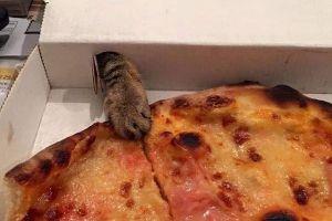 8 Foto ini buktikan jika kucing punya kemampuan mencuri yang lihai