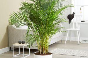Tak cuma sebagai hiasan, 7 tanaman ini bikin segar luar dalam
