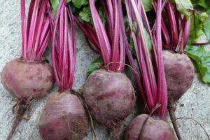 6 Manfaat bit, buah berwarna merah yang baik bagi kesehatan