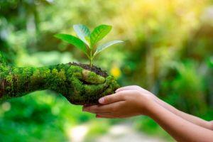 Lakukan 7 langkah sederhana ini untuk memulai eco lifestyle