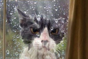 14 Tingkah nyeleneh kucing ini bikin geleng-geleng kepala
