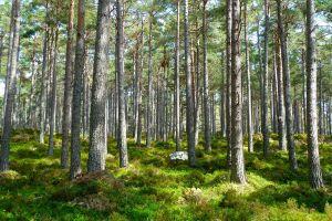 Jenis hasil hutan dan manfaatnya bagi kehidupan seluruh makhluk Bumi