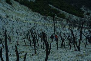 Wisata Papandayan, bertemu hamparan edelweis dan melewati Hutan Mati