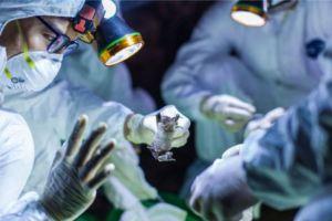 Sebuah laboratorium di Wuhan bereksperimen dengan kelelawar