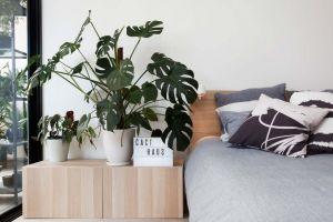 Inilah 4 manfaat mempunyai tanaman hias di kamar kos